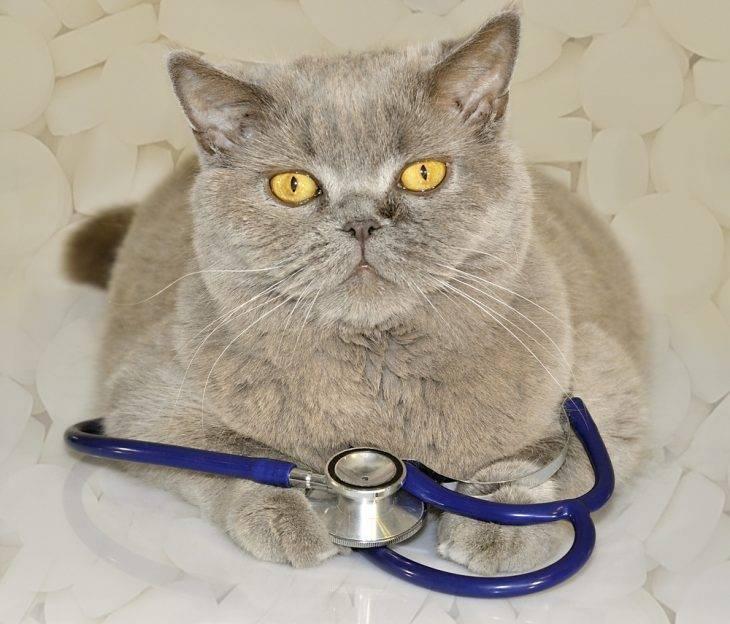 Вик кошек - иммунодефицит кошек (распространение, этиология, эпизоотология, патогенез, симтпомы и признаки, диагностика, терапия и профилактика). как лечить вик у кошек?