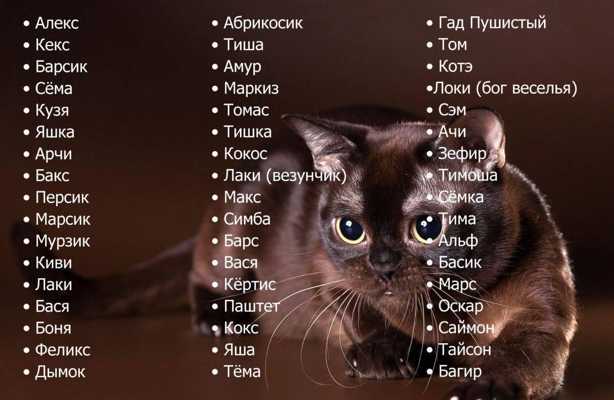 Имена (клички) для кошек девочек   редкие, красивые, легкие, как назвать