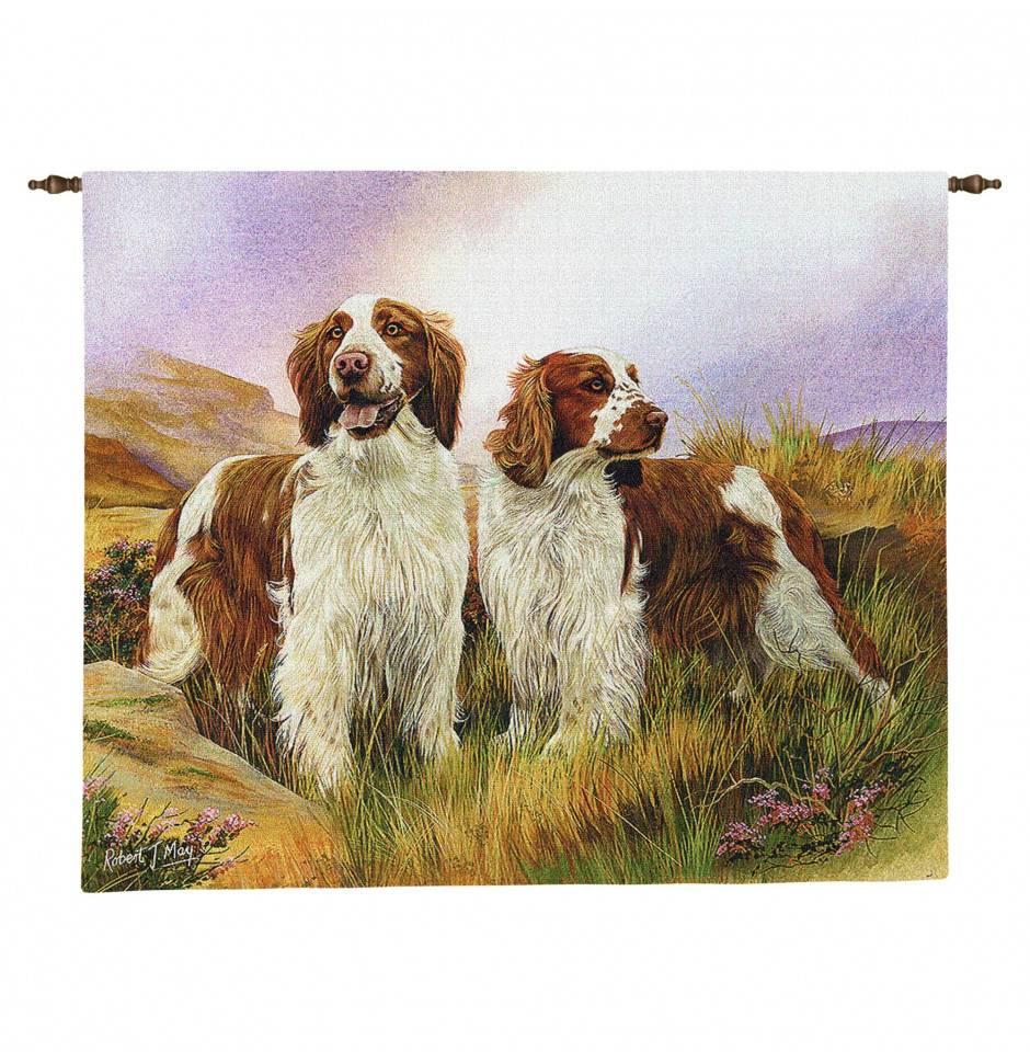 Описание породы «вельш-спрингер-спаниель»: фото собак, история появления, особенности характера и правила ухода