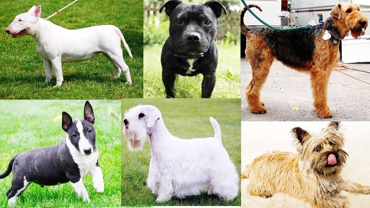 Породы собак выведенные в россии и ссср: какие существуют разновидности