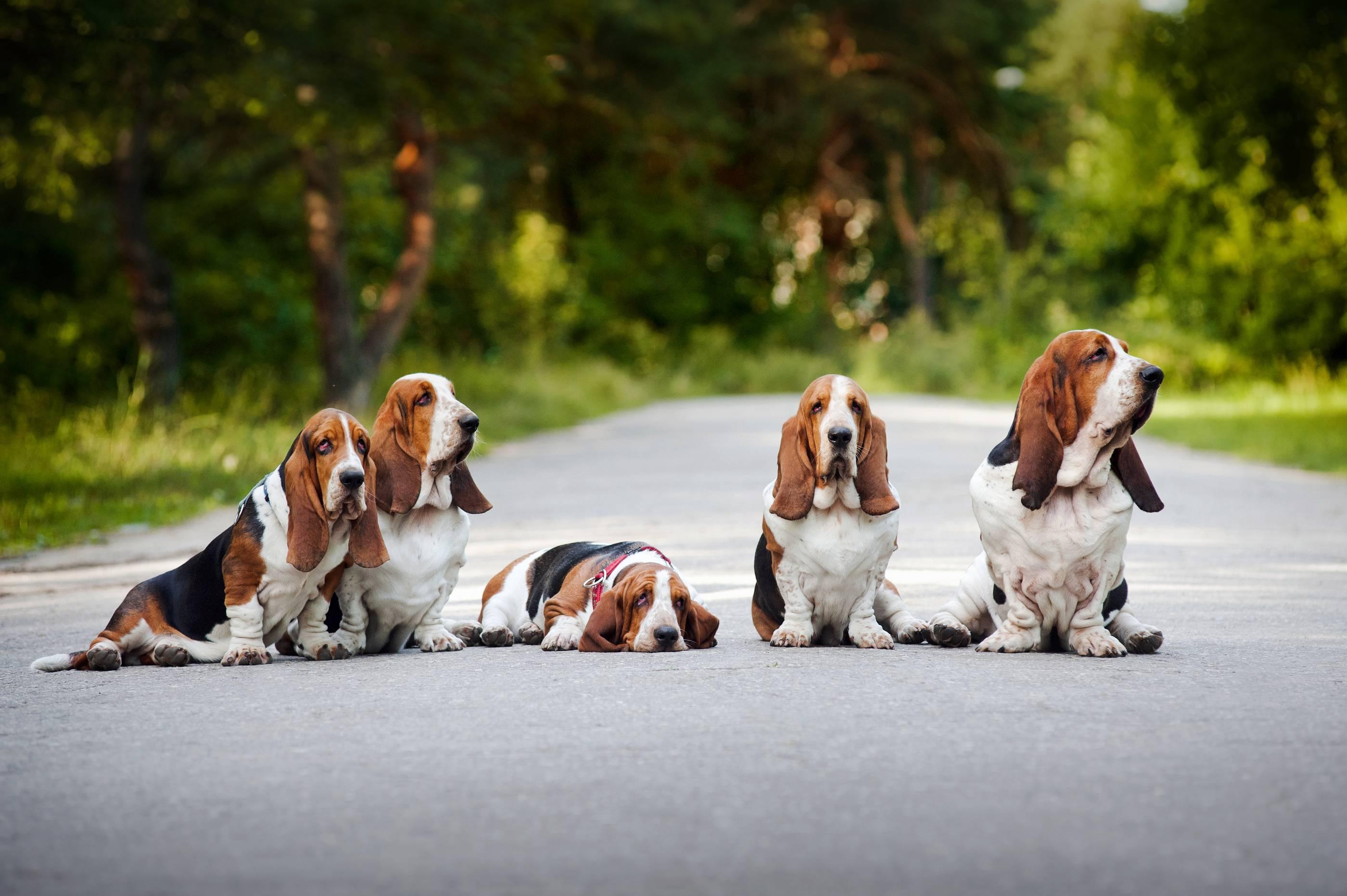 Как выбрать собаку для похода