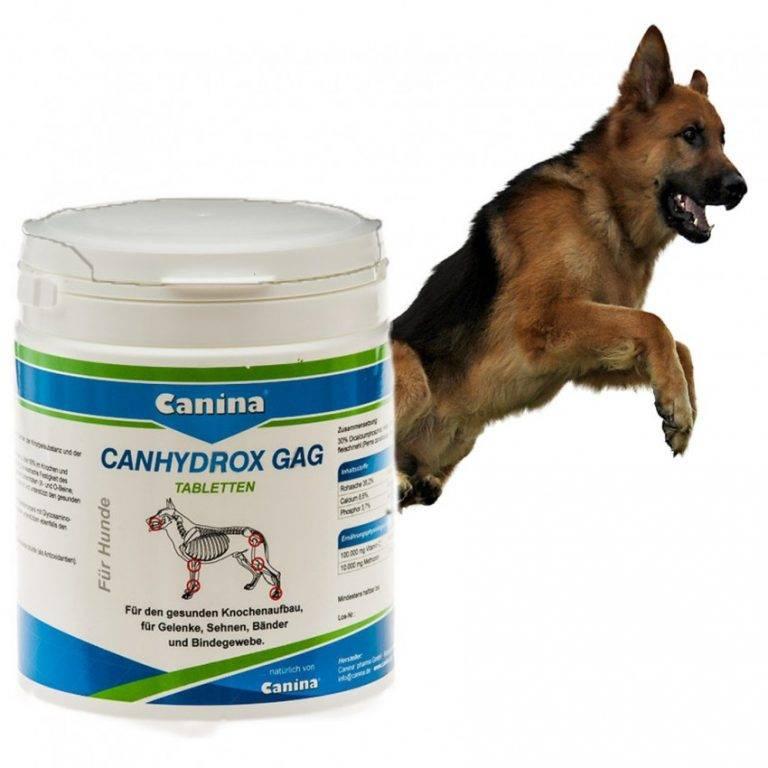 Какие витамины нужны собакам