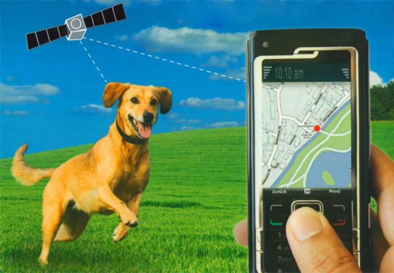 Обзор и особенности лучших gps-ошейников для охотничьих пород собак
