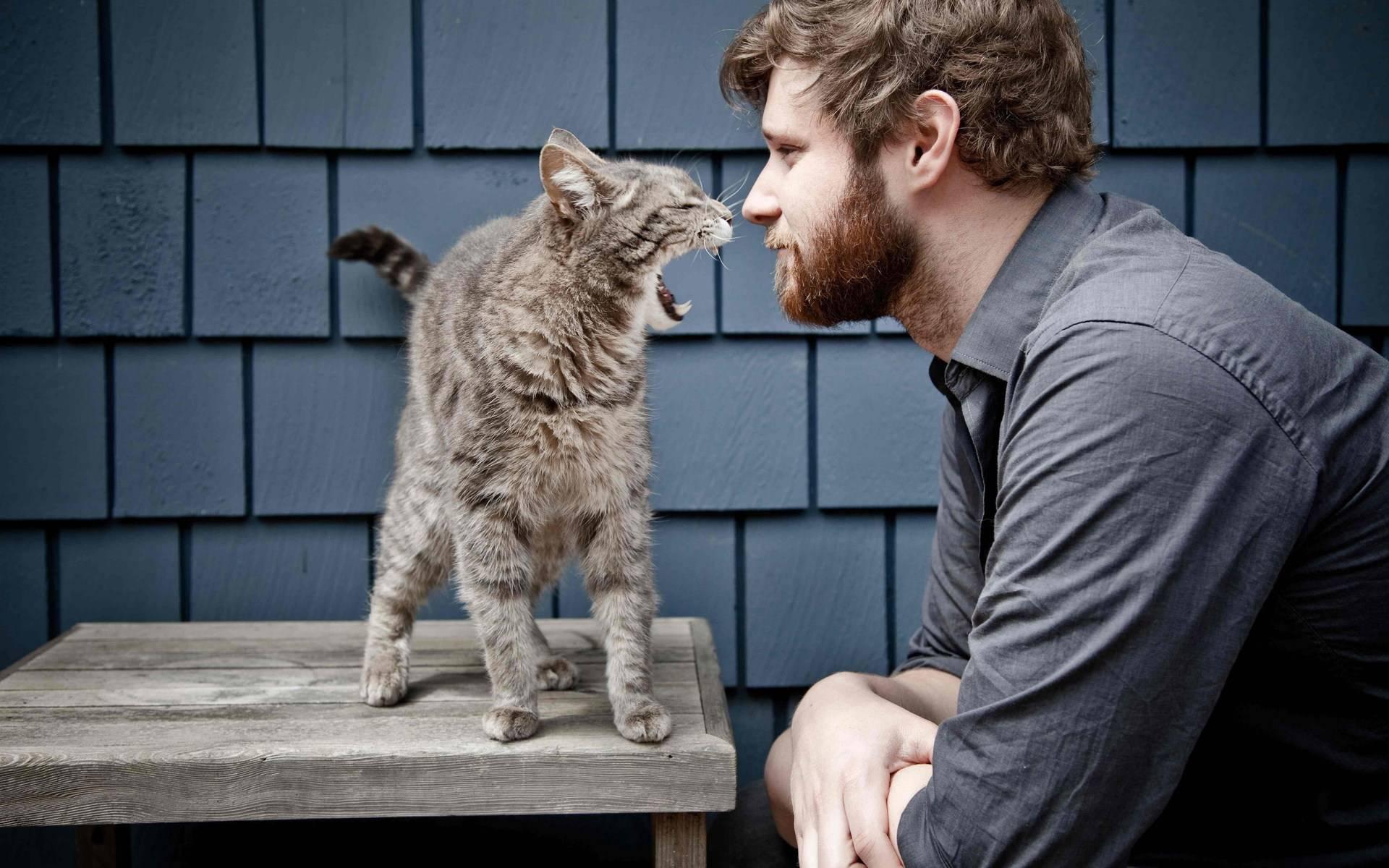 Скучают ли кошки по своим хозяевам: научные исследования