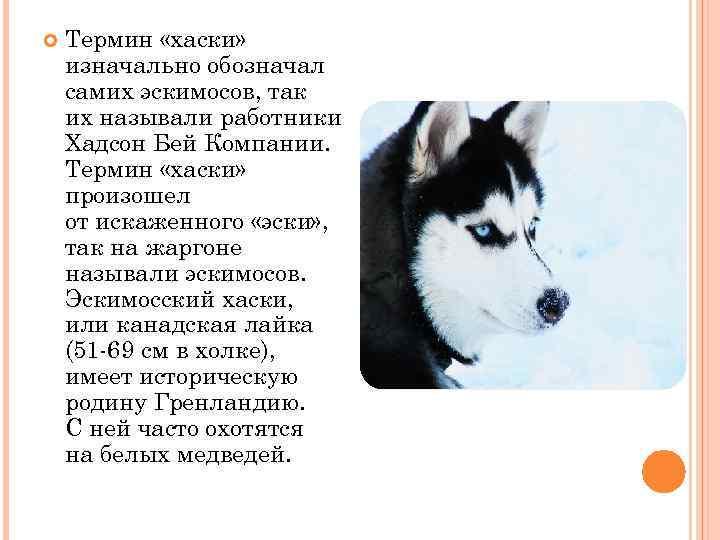 Описание и стандарт породы сибирских хаски - хаски клуб