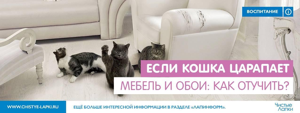 Как отучить кота драть обои и мебель, и прыгать на стены: практические советы и ноухау