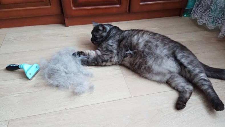 Кошка сильно линяет: почему и что делать?