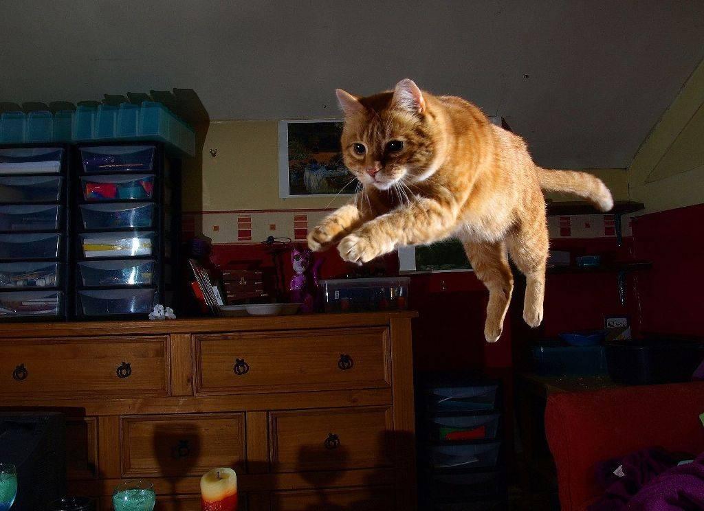 Почему кошка мяукает по ночам? ~ коточек