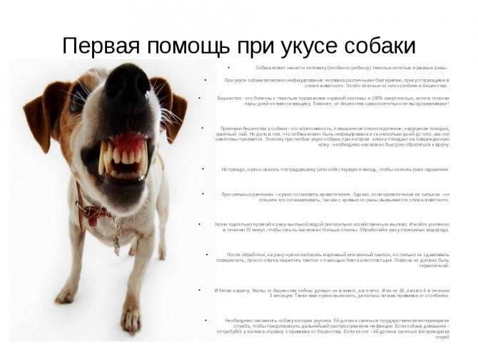 Что делать, если укусила собака - лайфхакер