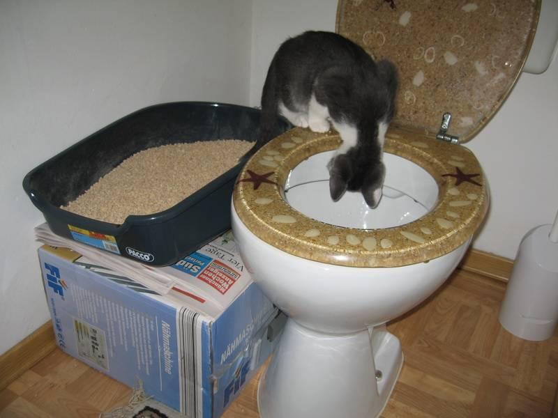 Как приучить кота спать ночами и в утренние часы?