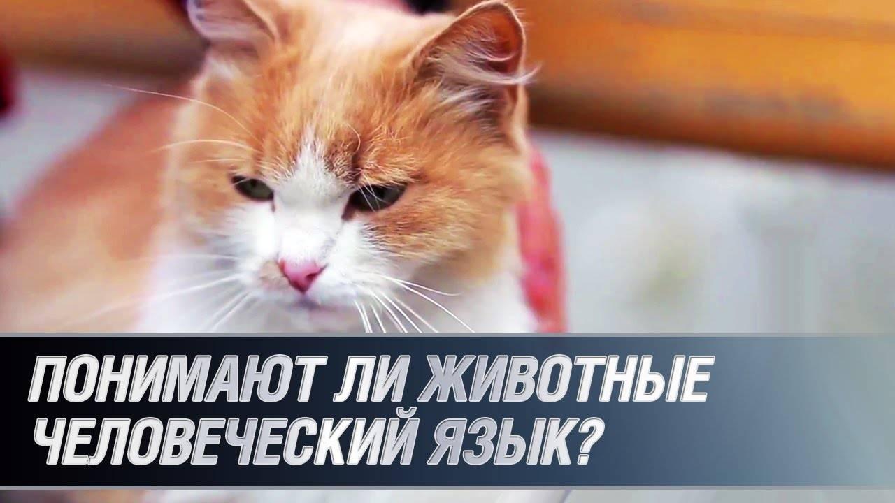 Научно доказано: кошки понимают человеческую речь - новости на kp.ua