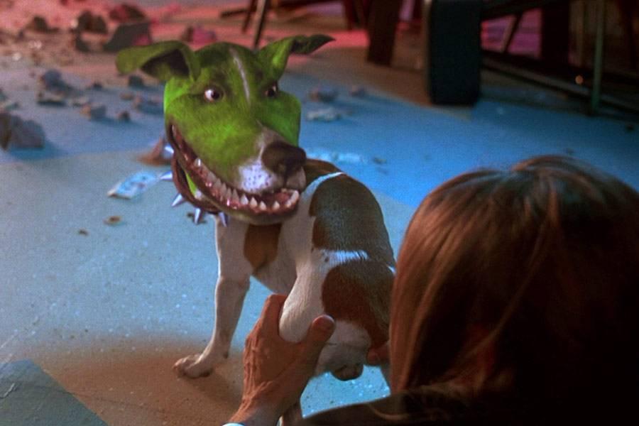 Порода собаки майло из художественного фильма «маска»