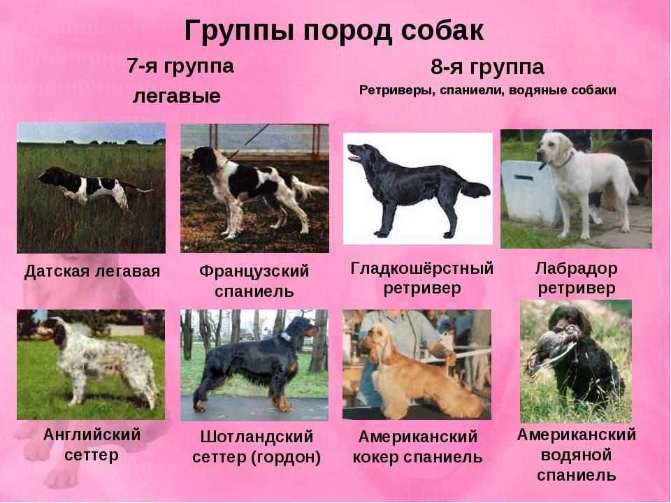 Самые древние породы собак в мире — обзор с фотографиями и названиями