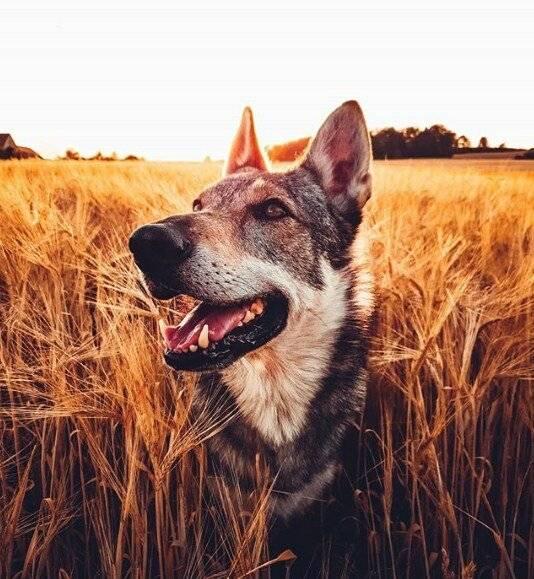 6 самых популярных животных в инстаграм, за которыми интересно наблюдать