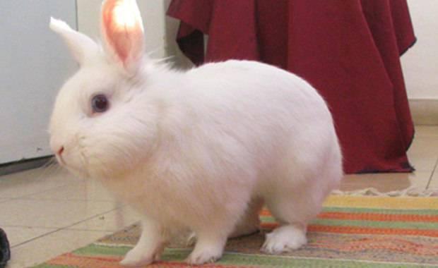 Оригинальные клички для кроликов. смешные и забавные имена.