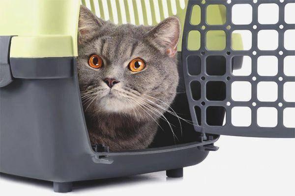 Почему кошки становятся агрессивными? причины и что с этим делать?