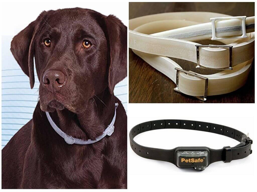 Ошейник для собак от блох и клещей: какой лучше