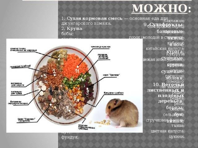 Чем можно кормить хомяка в домашних условиях - питание
