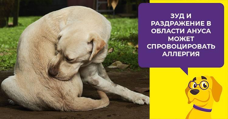 Почему собака бегает за своим хвостом - причины и методы устранения