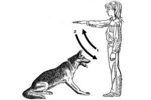 Подробная пошаговая инструкция по обучению собаки команде «голос»