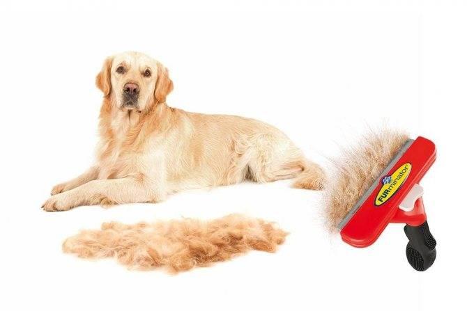 Собака сильно линяет: количество линек, что считается нормой, зимняя и летняя линька, причины обильной линьки, что делать, витамины