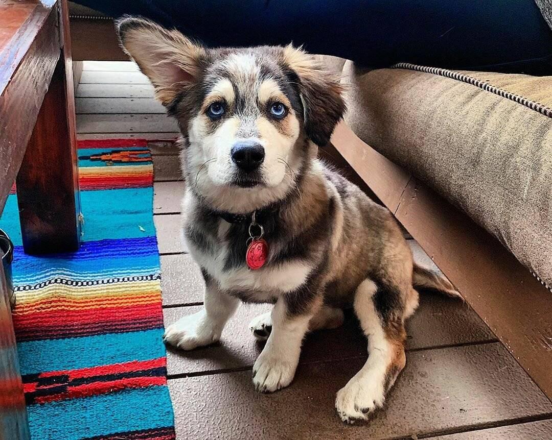 Самые опасные собаки в мире ? топ 30 пород собак убийц с фото и описанием | petguru
