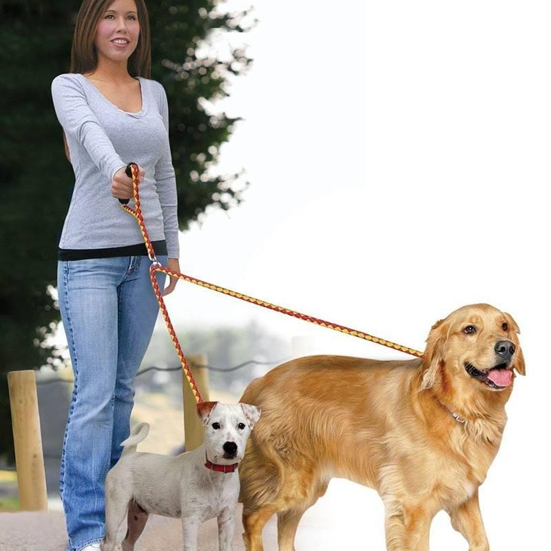 Как приучить собаку к ошейнику и поводку | сайт о маленьких собачках и не только