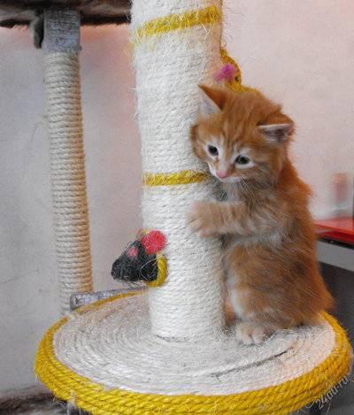 Как приучить котенка к лотку в квартире легко и быстро - проверенные способы, советы и рекомендации