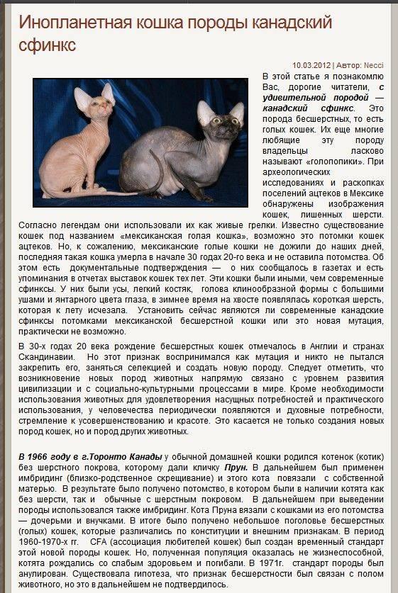 Кошка канадский сфинкс: описание породы, характер, цена, продолжительность жизни, уход и содержание, фото