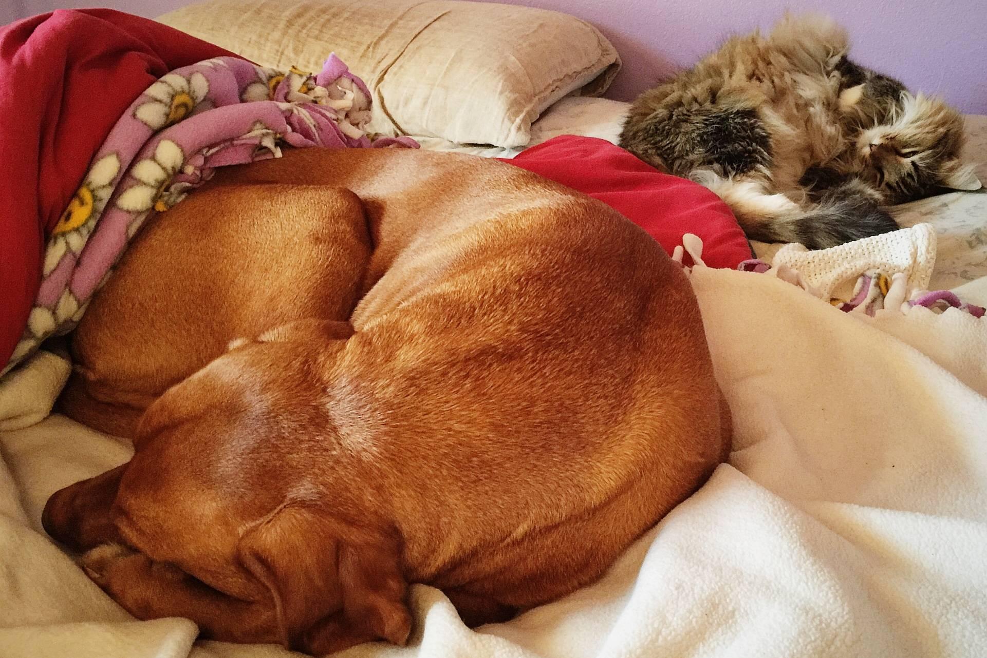 Как приучить щенка оставаться одному в квартире