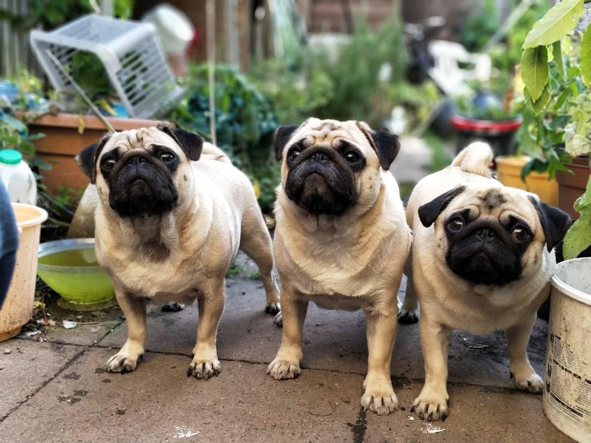 Собаки, которые не вызывают аллергию – топ 20 пород