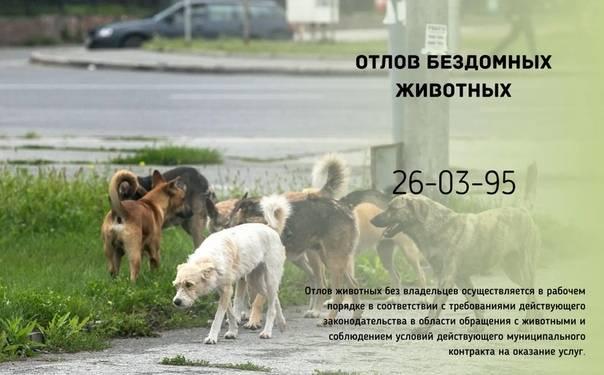 Собачья смерть: несмотря на запрет, бродячих животных продолжают убивать | статьи | известия