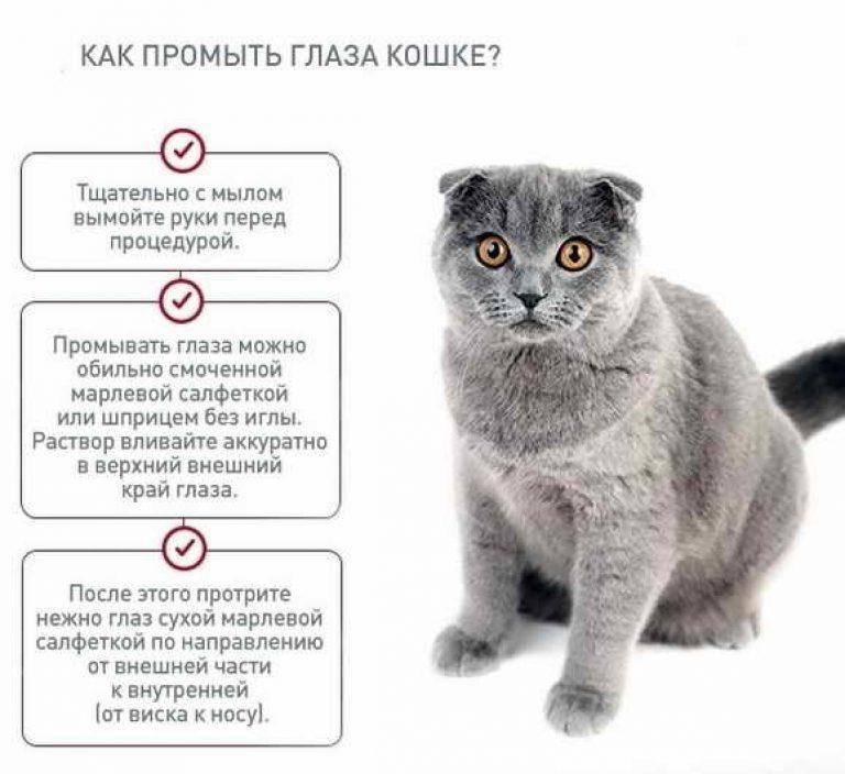 Воспаленные глаза у кота чем лечить - муркин дом