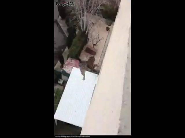 Что делать, если кошка упала с 4 этажа?