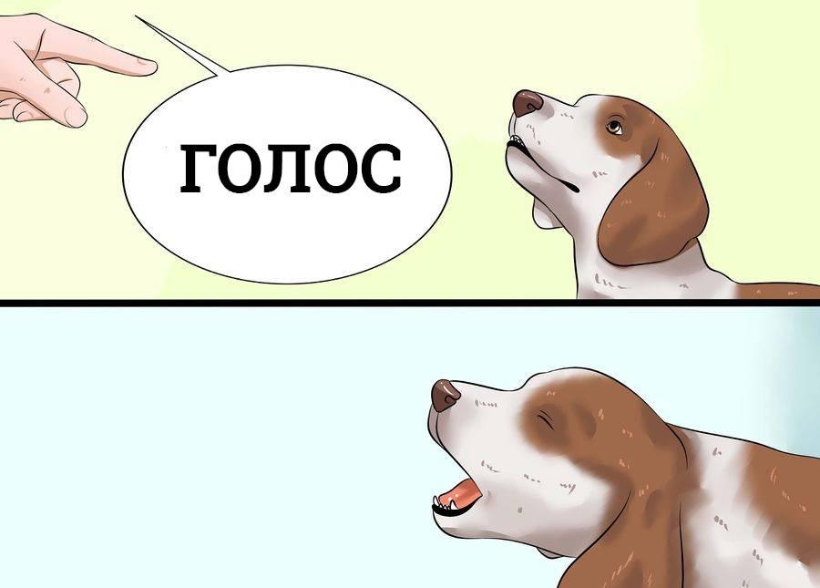 Как научить собаку команде голос | как приучить