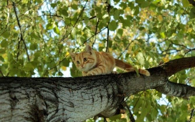 Как избавится от кошки гуманным способом | catstreet.ru