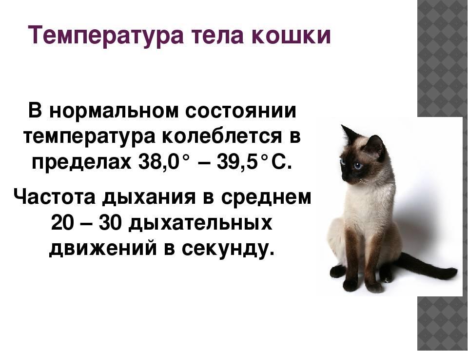 Нормальная температура у кошек и как ее измерить нормальная температура у кошек и как ее измерить