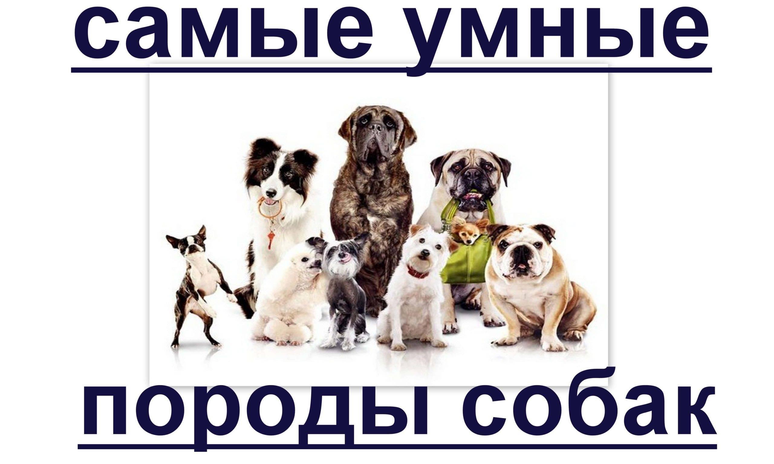 10 самых добрых пород собак