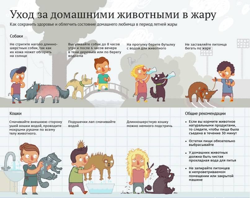 Как облегчить жизнь собаки в жару