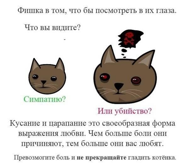 Какие поглаживания предпочитают кошки