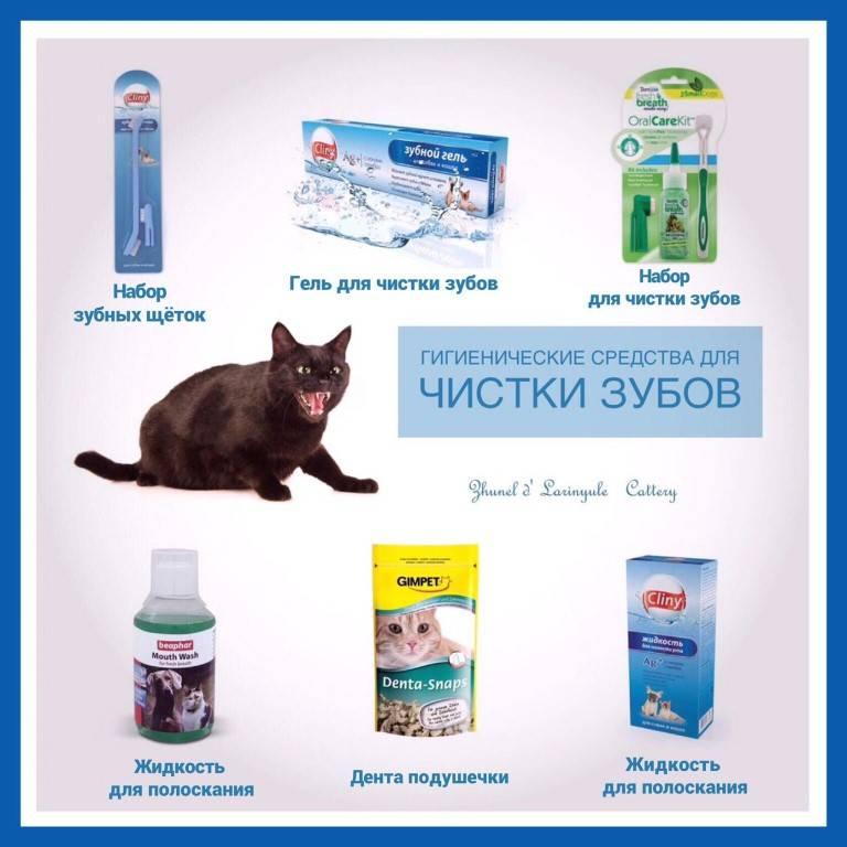 Рекомендации по уходу за зубами кошки