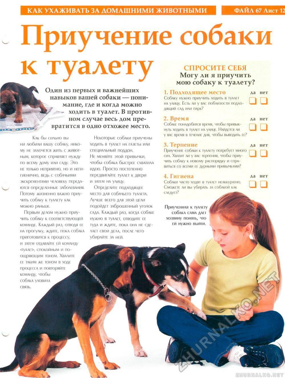 Как приучить щенка оставаться одному в квартире. как приучить щенка оставаться в квартире одному как приучить собаку быть одной дома - новая медицина