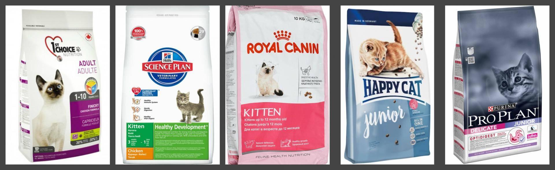 Нормы корма для кошек: ? сколько корма нужно кошке