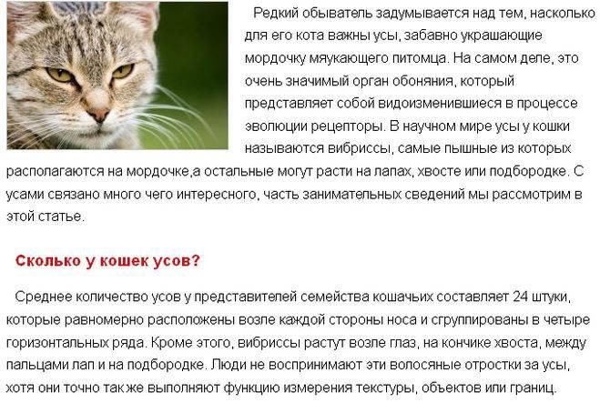 Характер пород кошек