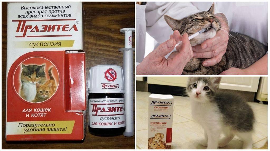 Празител для кошек и котят: инструкция, отзывы