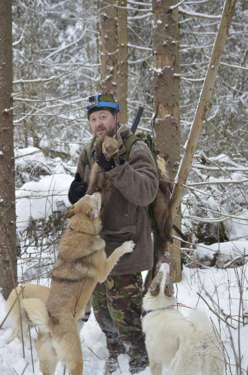Лайки охотничьи: разновидности породы и их дрессировка