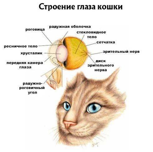 Как кошки видят окружающий мир днём и ночью