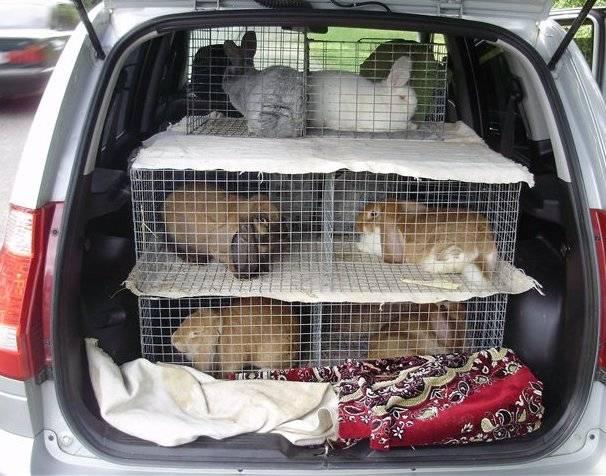 Как правильно перевозить собаку в машине: правила гаи