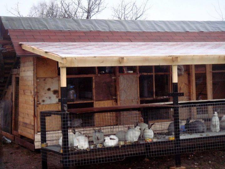 Содержание и разведение кроликов в вольерах - мое село