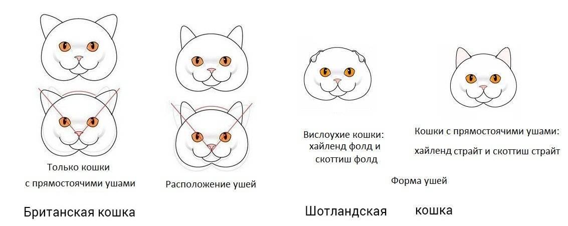 Как отличить кота от кошки: советы по определению пола питомца